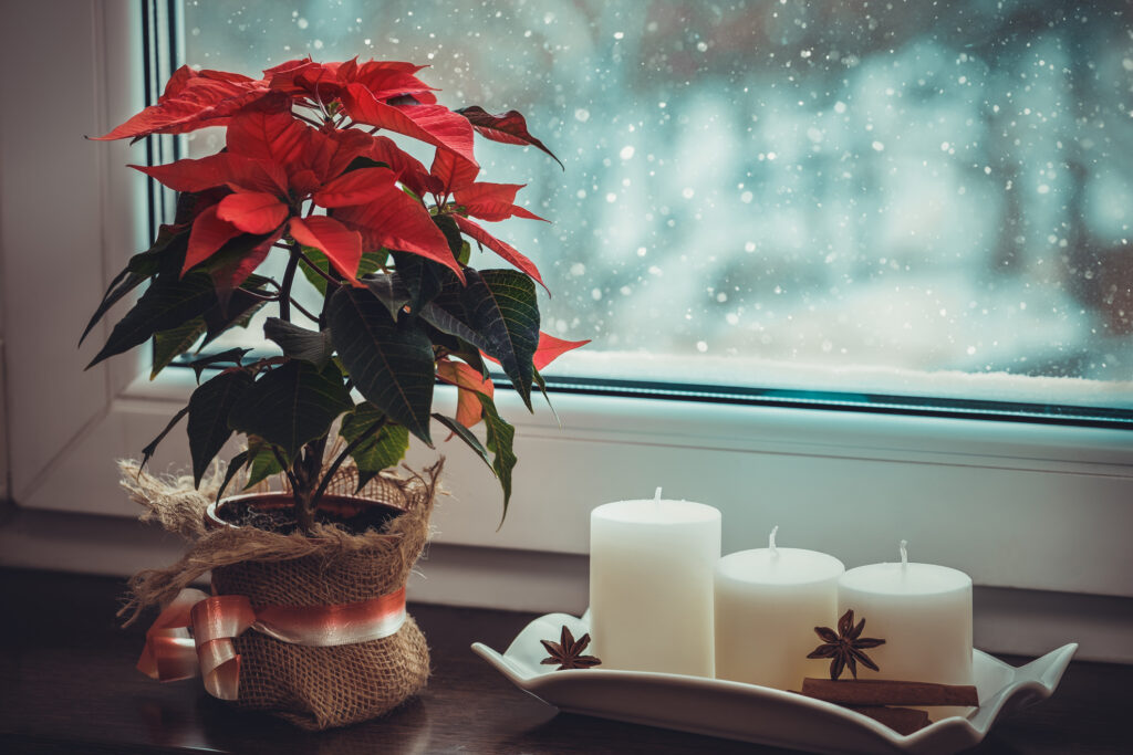 Red poinsettia, traditional Christmas flower and candles on the windowsill of a winter window.