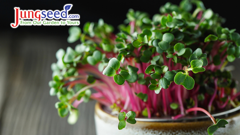 How To Grow Microgreens – Step By Step Instructions