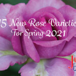 15 New Roses