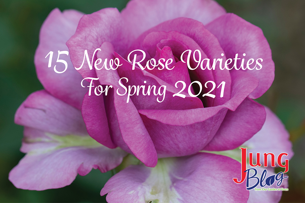 15 New Rose Varieties For Spring 2021