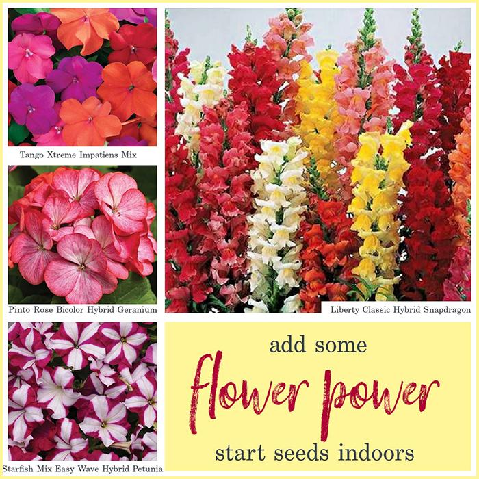 Add some flower power. Start Seeds Indoor.