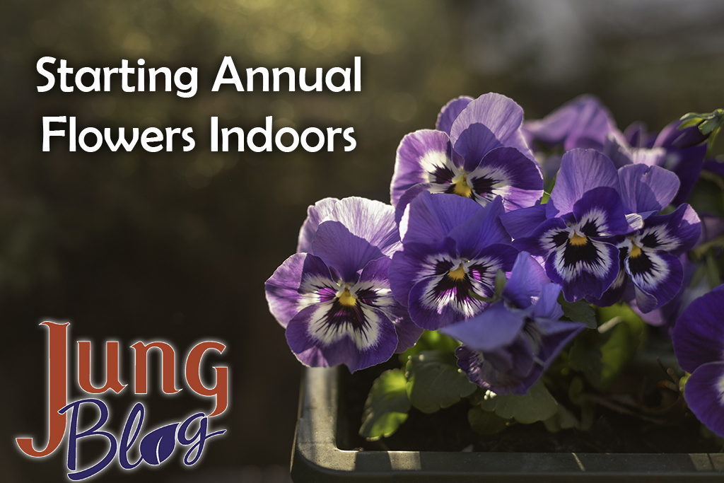 Starting Annual Flower Seeds Indoors