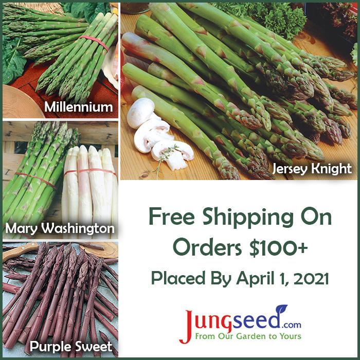 Asparagus varieties for sale