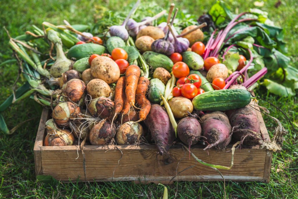 Garden produce and harvested vegetable. Fresh farm vegetables in wooden box