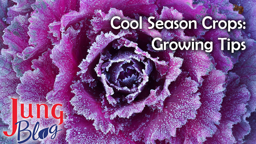 Cool Season Crops: Growing Tips