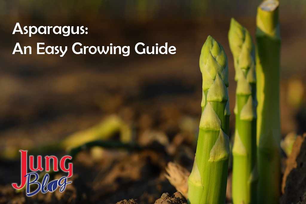 Asparagus: An Easy Growing Guide