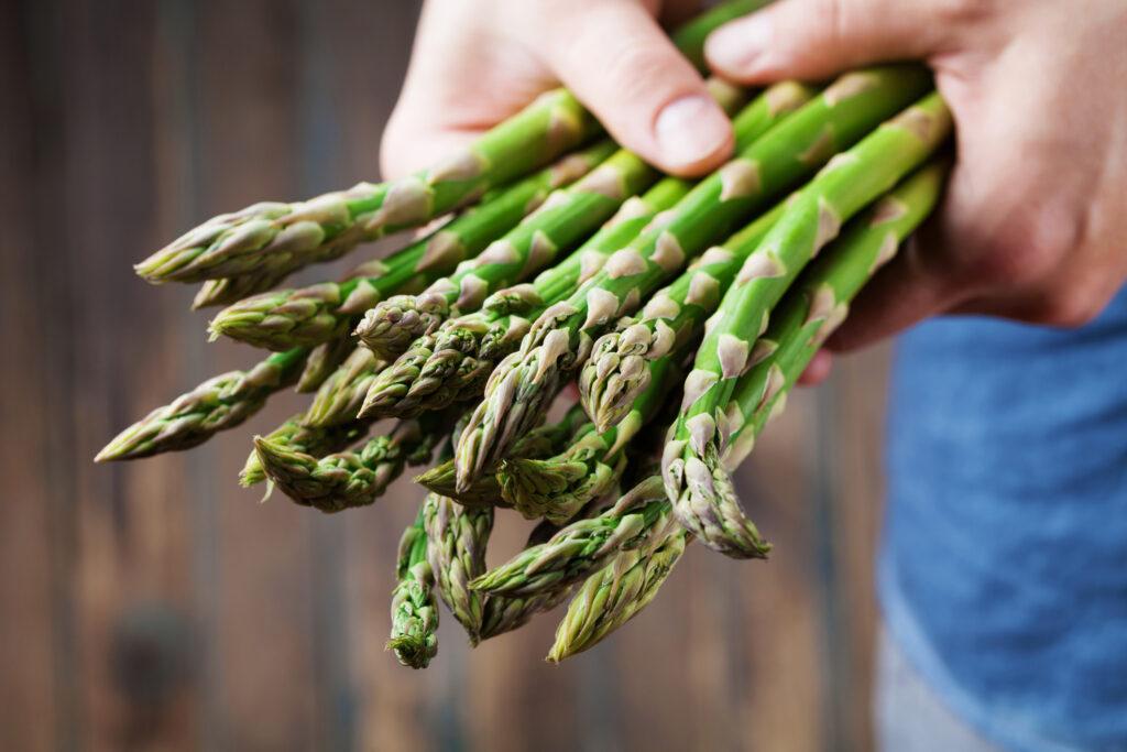 Farmer holding in hands the harvest of fresh green asparagus. Organic vegetables.