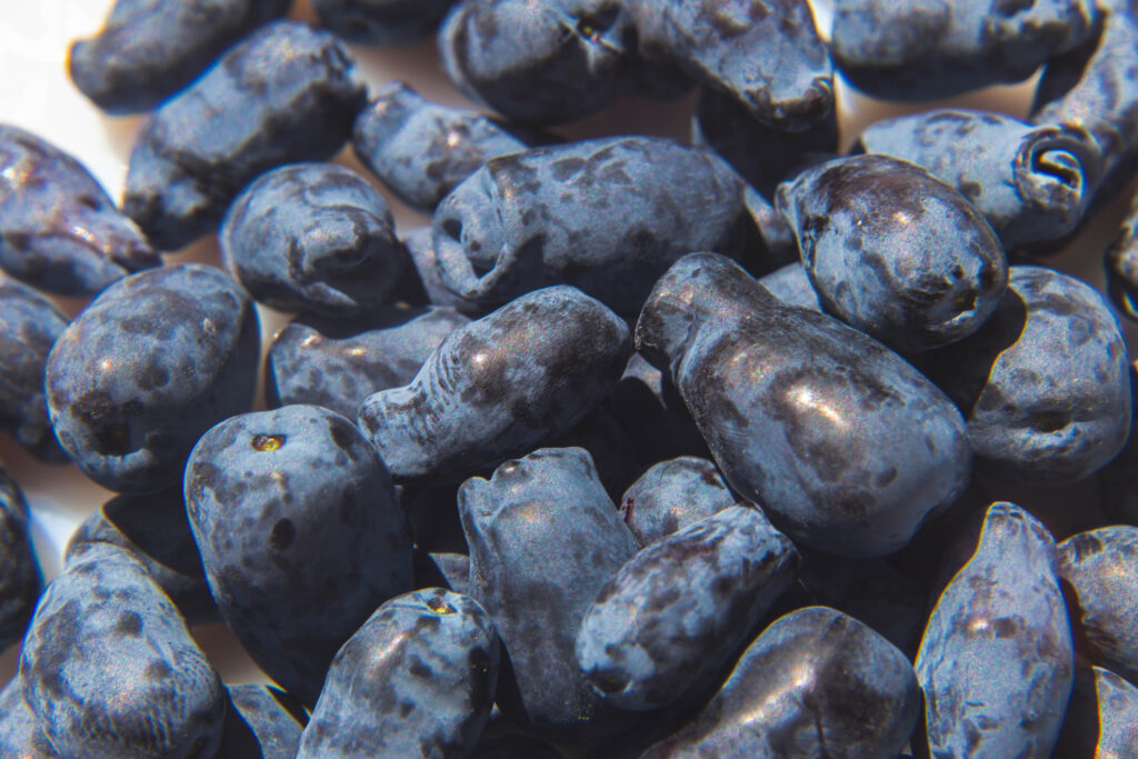 freshly ripened blue honeysuckle honeyberries