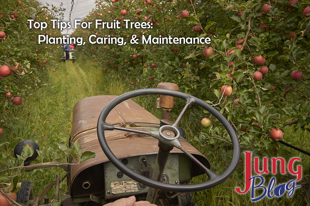 Top Tips For Fruit Trees: Planting, Caring, & Maintenance