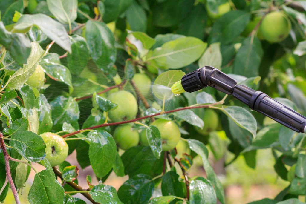 Protecting apple tree from fungal disease or vermin by pressure sprayer with chemicals.