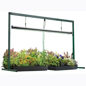 Lights for growing seeds