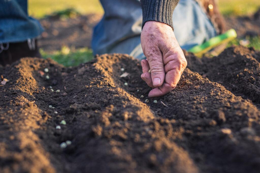 Farmer planting seeds in soil.