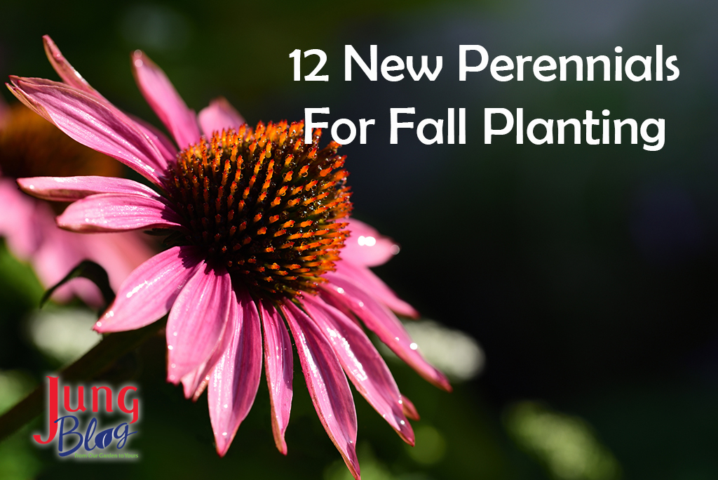 12 New Perennials For Fall Planting