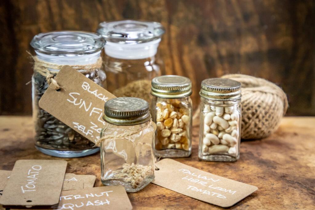 Heirloom Seeds being Preserved in Glass Jar