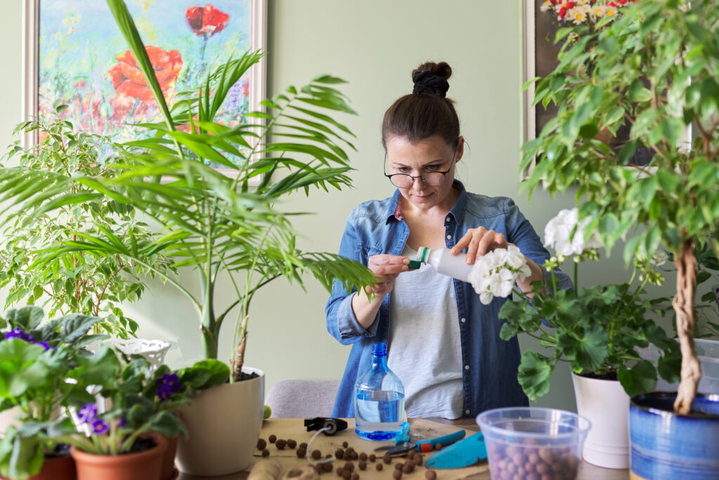 Woman pours liquid mineral fertilizer. Cultivation and caring for indoor potted plants