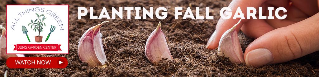 Jung Garden Center video on Planting Fall Garlic