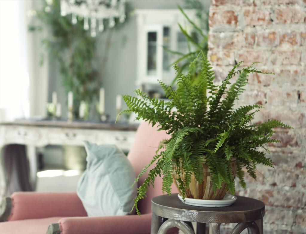 A houseplant on a wooden stool inside a house