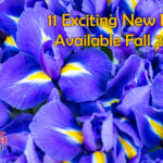 11 exciting new irises available fall 2021