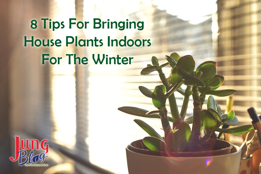 8 Tips For Bringing Houseplants Indoors For The Winter
