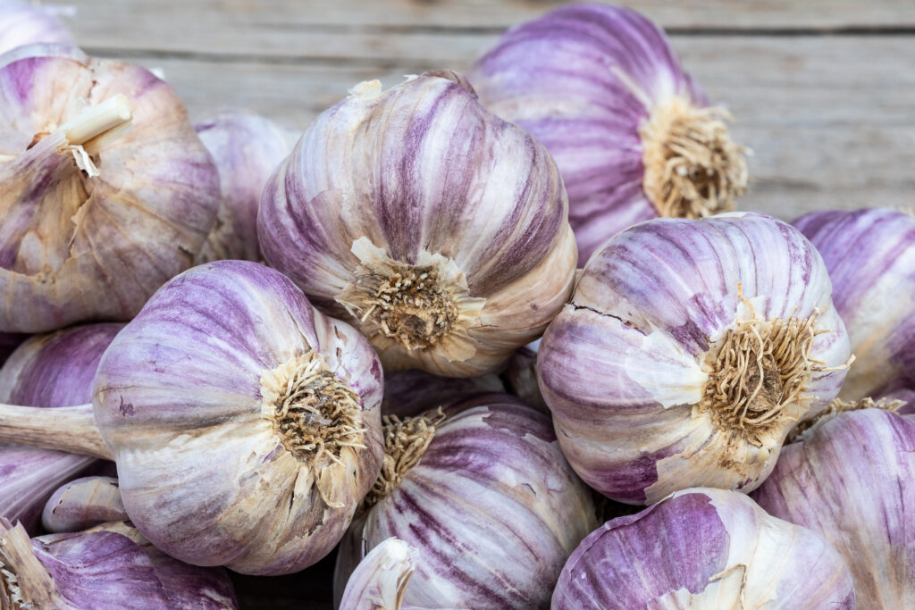Garlic on wooden vintage background. Seedlings for planting garlic.