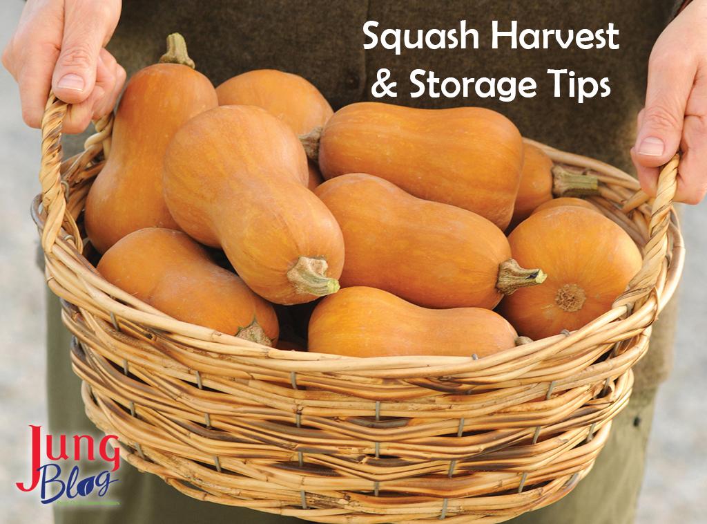 Squash Harvest & Storage Tips