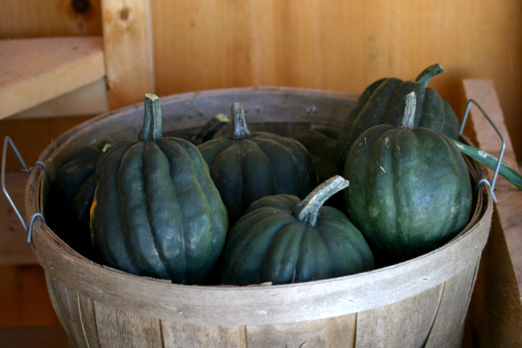 Acorn Squash in a basket ready to be stored